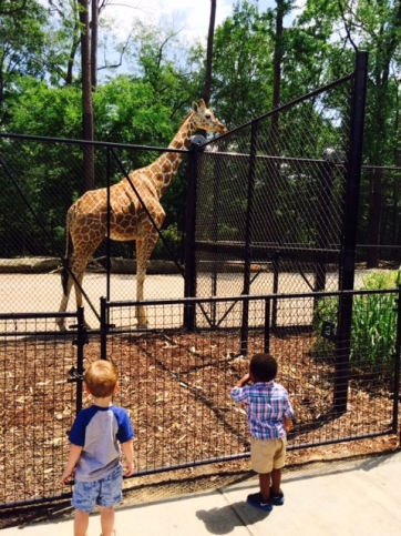 Beaux William watches the giraffes at the Birmingham Zoo.