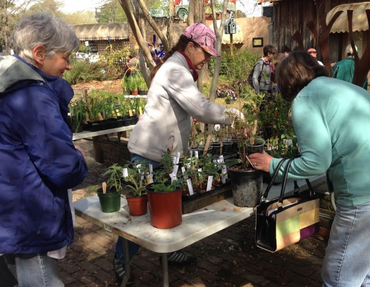 The AWS' native plant sale is an opportunity for residents to purchase everything from native azaleas to shrubs to native violets and irises for some of the lowest prices available in this area.