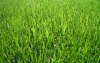 The Grass is Always Greener: Tips to Keep Your Lawn Green